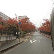 11月に入り紅葉しています。
