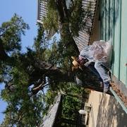 屋根の掃除